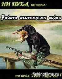 Ни пуха, ни пера. Работа охотничьих собак по боровой и водоплавающей дичи