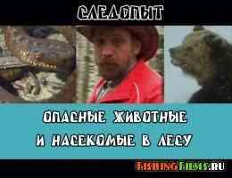 Опасные животные и насекомые в лесу