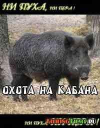 Охота на кабана онлайн
