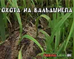 Охота на вальдшнепа весной