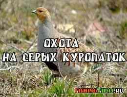 Охота на серых куропаток