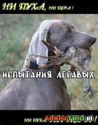 Испытания легавых собак