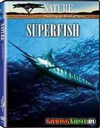 Марлин - самый быстрый морской хищник
