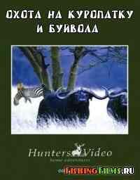 Охота на куропатку и буйвола