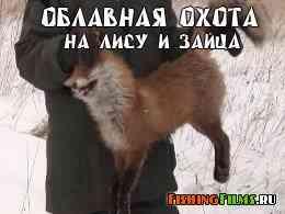 Облавная охота на лису и зайца