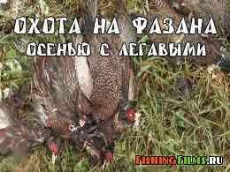 Охота на фазана осенью с легавыми