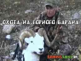 Охота на горного барана