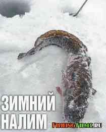 Зимний налим