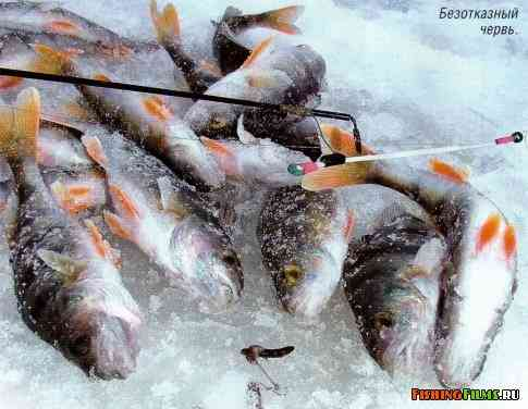 рыбалка в тайге на зимовке
