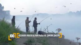Осенняя ловля белой рыбы на диком Днепре